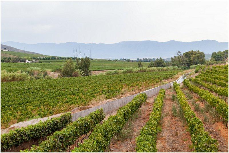 Esona Boutique Wine Estate