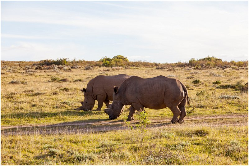private game reserve western cape rhino Rhinoceros