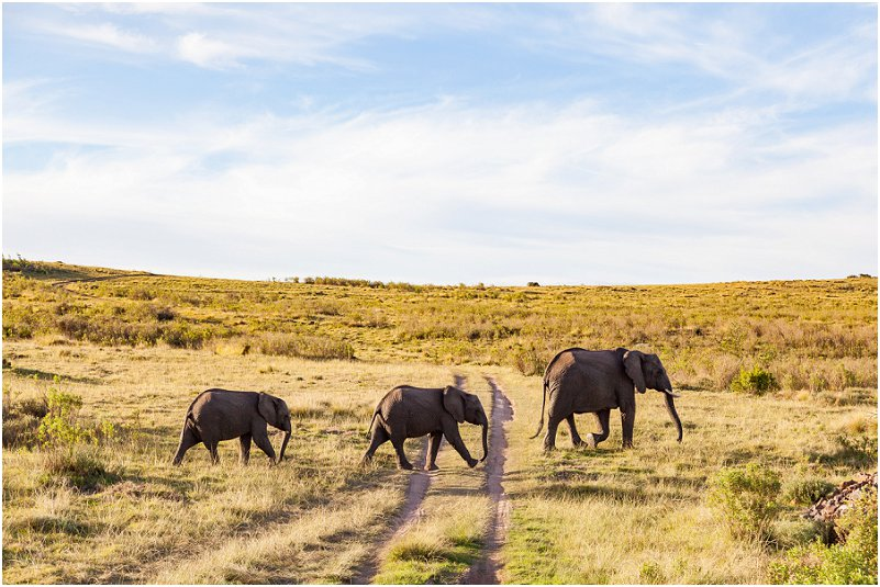 luxury lodges western cape elephant