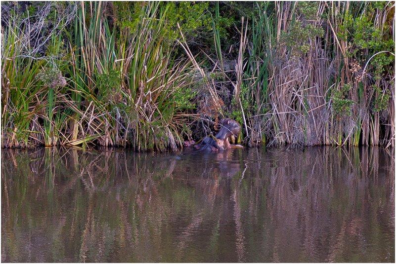 vorsprung studio Hippopotamus