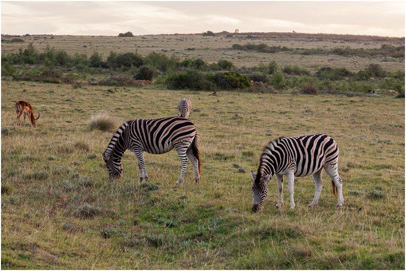 vorsprung studio zebra