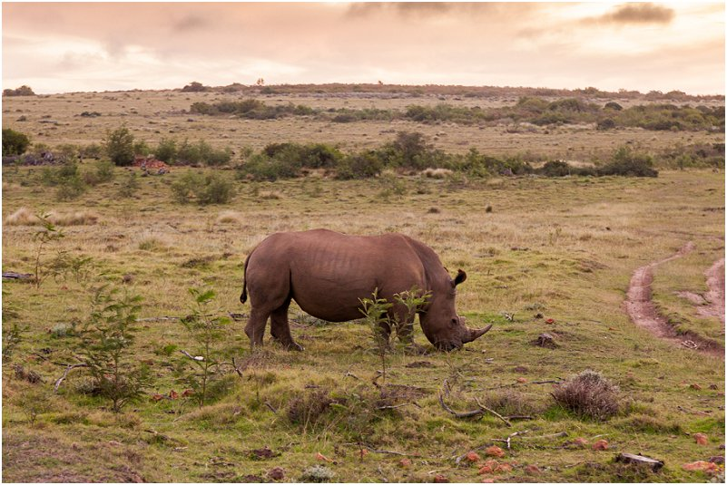 game reserves in south africa Rhinoceros