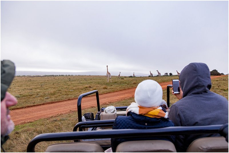 gondwana game reserve giraffe
