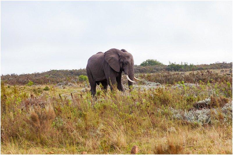 vorsprung studio elephant
