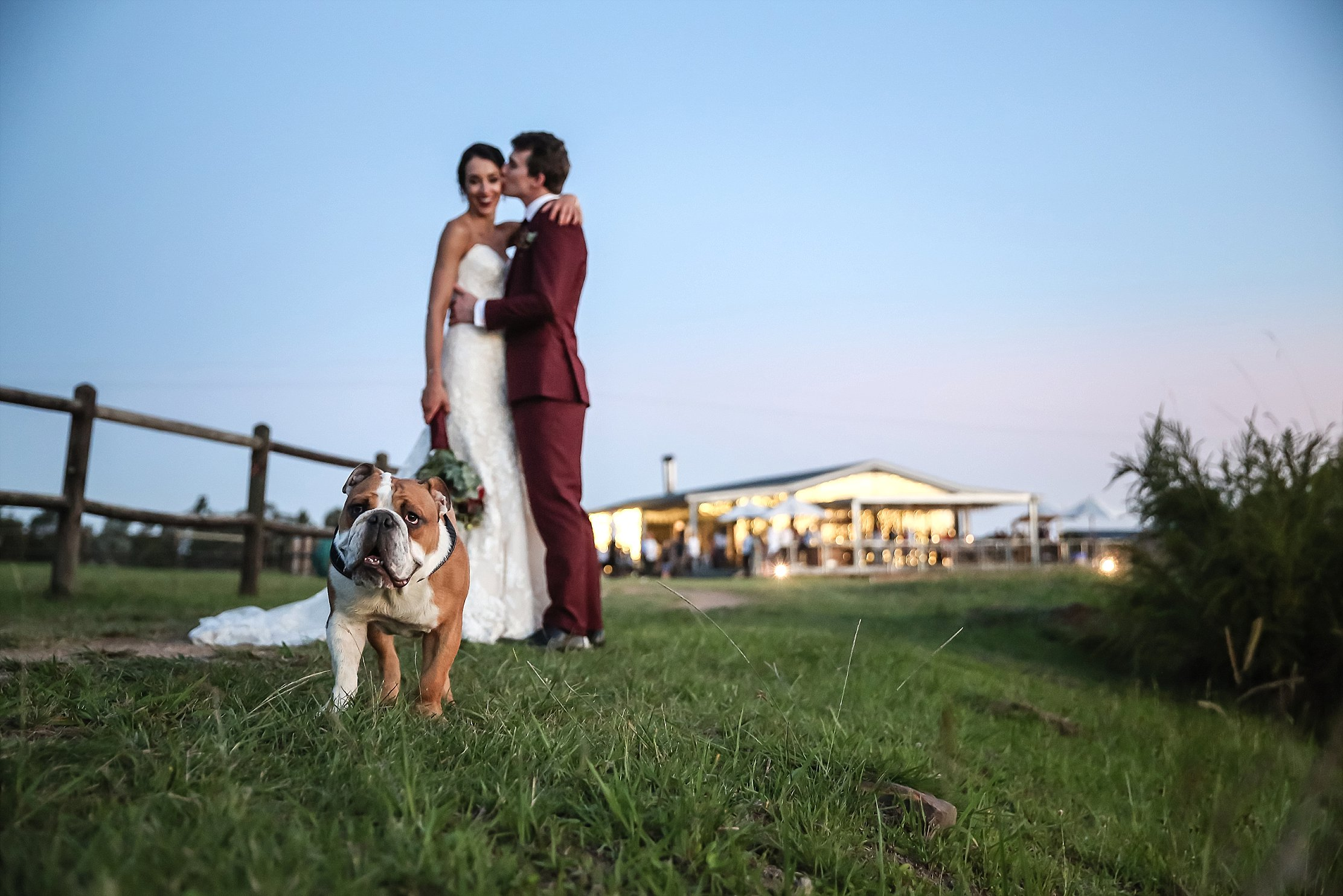 Bride and groom in Maroon suit with bulldog