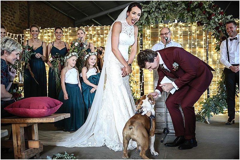 English bulldog at wedding