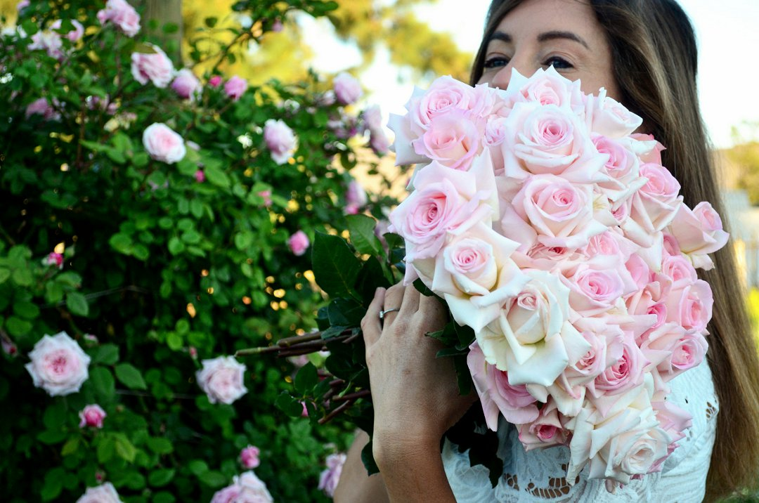 roses for wedding